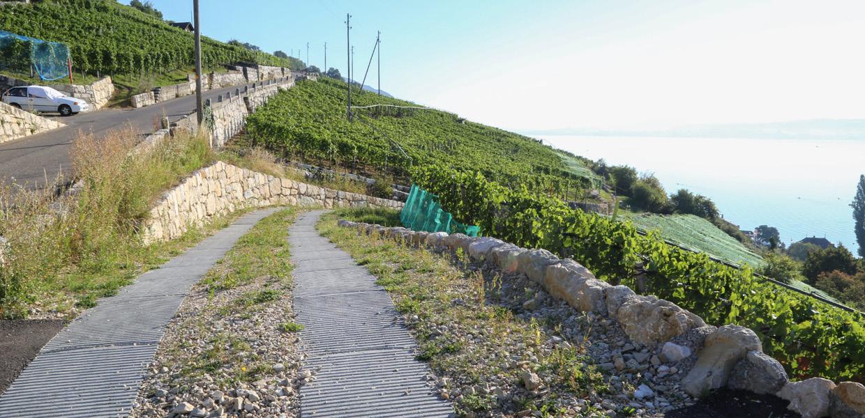 Natursteinmauern8